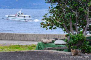 池島猫と旅客船