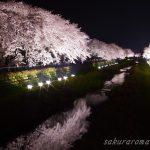 絶対おすすめ!調布市「野川の桜ライトアップ」は東京一の夜桜浪漫