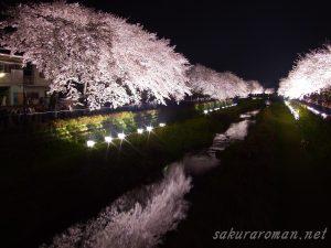 野川の桜ライトアップ1