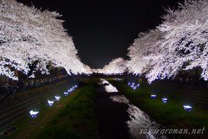 野川の桜ライトアップ4-5