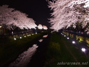 野川の桜ライトアップ7