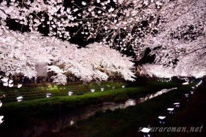 野川の桜ライトアップ6