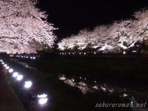 野川の桜ライトアップ9