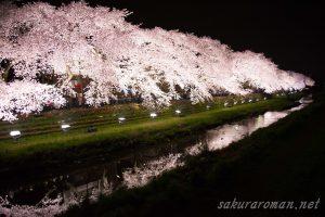 野川の桜ライトアップ2