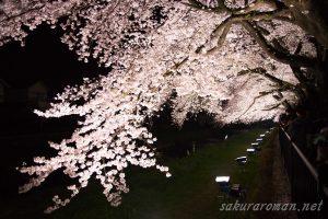 野川の桜ライトアップ10