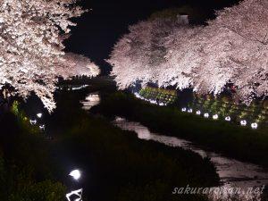 野川の桜ライトアップ8