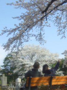 染井霊園の桜を楽しむ