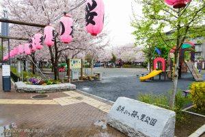 染井よしの桜の里公園