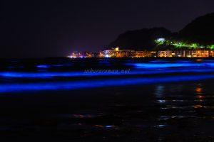 由比ヶ浜の青い海夜光虫2