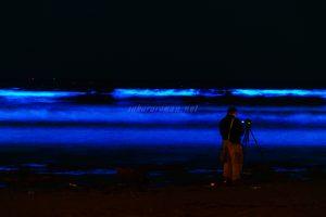 由比ヶ浜の青い海夜光虫5