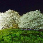 群馬県藤岡市にある白石稲荷山古墳の桜
